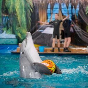 Дельфинарии, океанариумы Хомутово