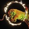 Цирки в Хомутово