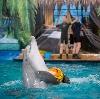 Дельфинарии, океанариумы в Хомутово